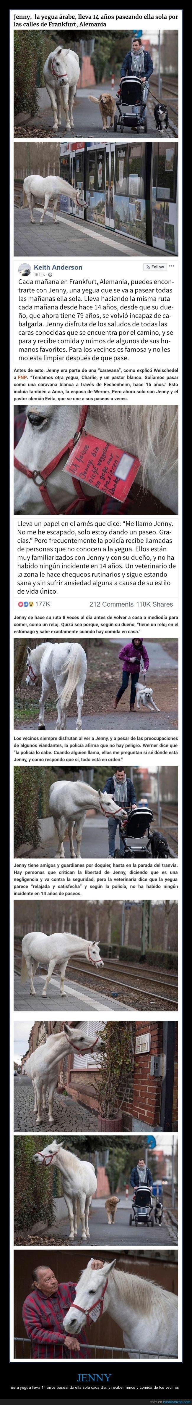 caballo,pasear,sola,vecinos,yegua