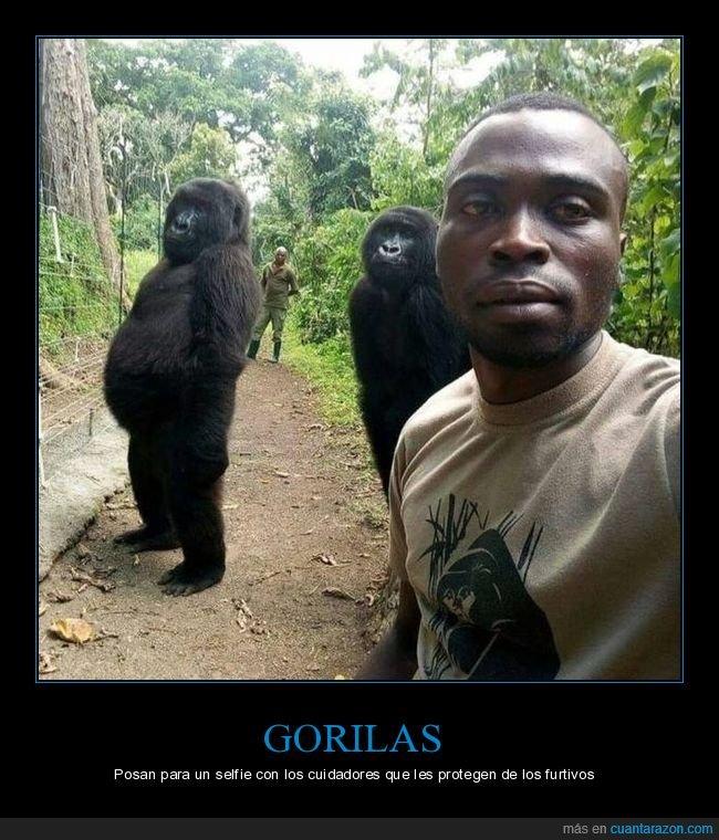 gorilas,posando,selfie