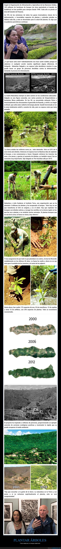 árboles,bosque,destruido,plantar,restaurar