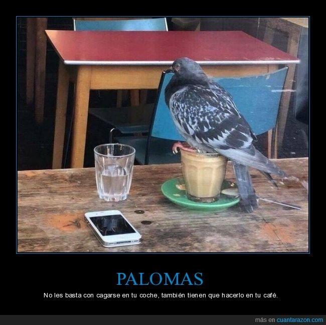 café,paloma,vaso