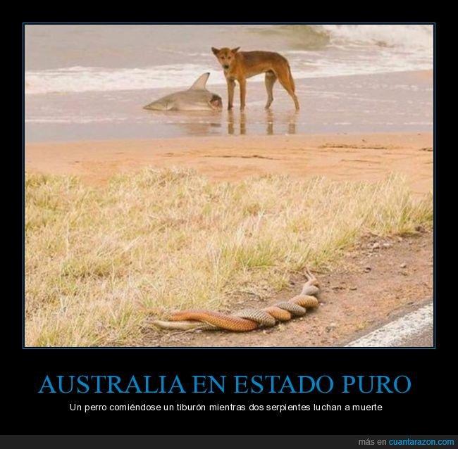 australia,perro,serpientes,tiburón,wtf