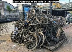 Enlace a Pesca de bicicletas en los canales de Amsterdam