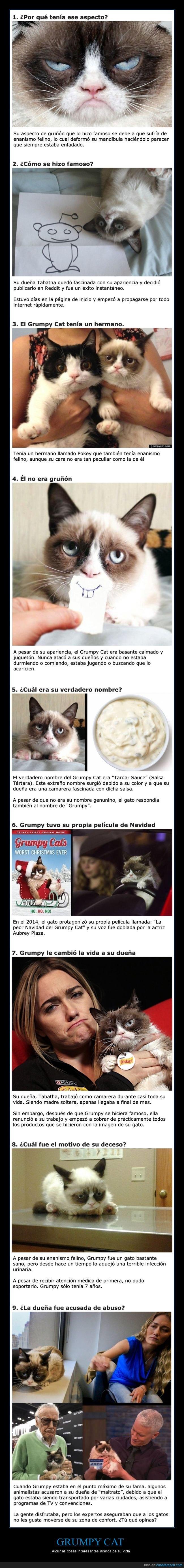curiosidades,grumpy cat