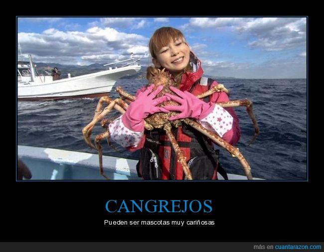 abrazando,cangrejo,wtf