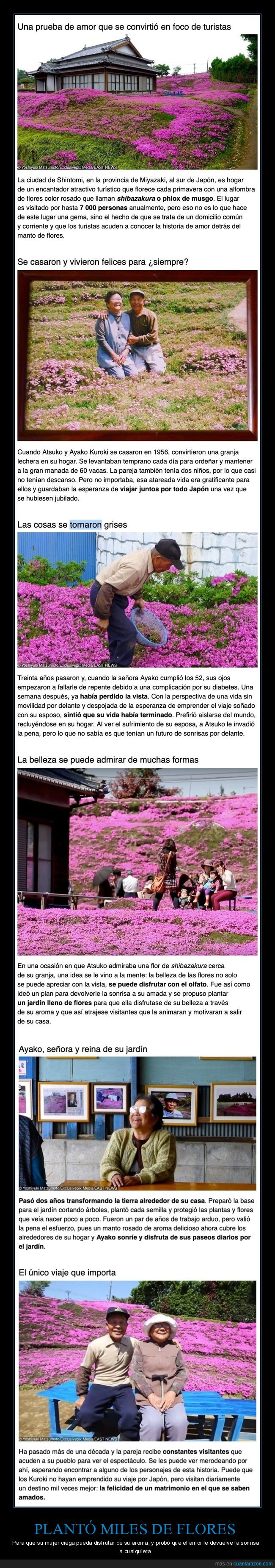 ciega,flores,mujer,oler,plantar