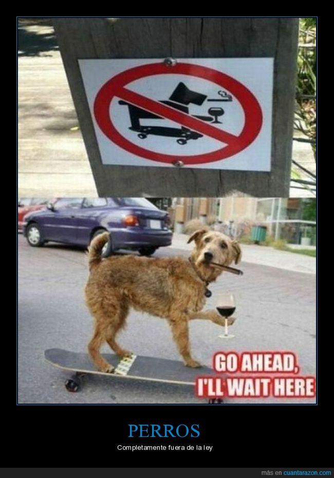 beber,cartel,fumar,perros,prohibición,skate