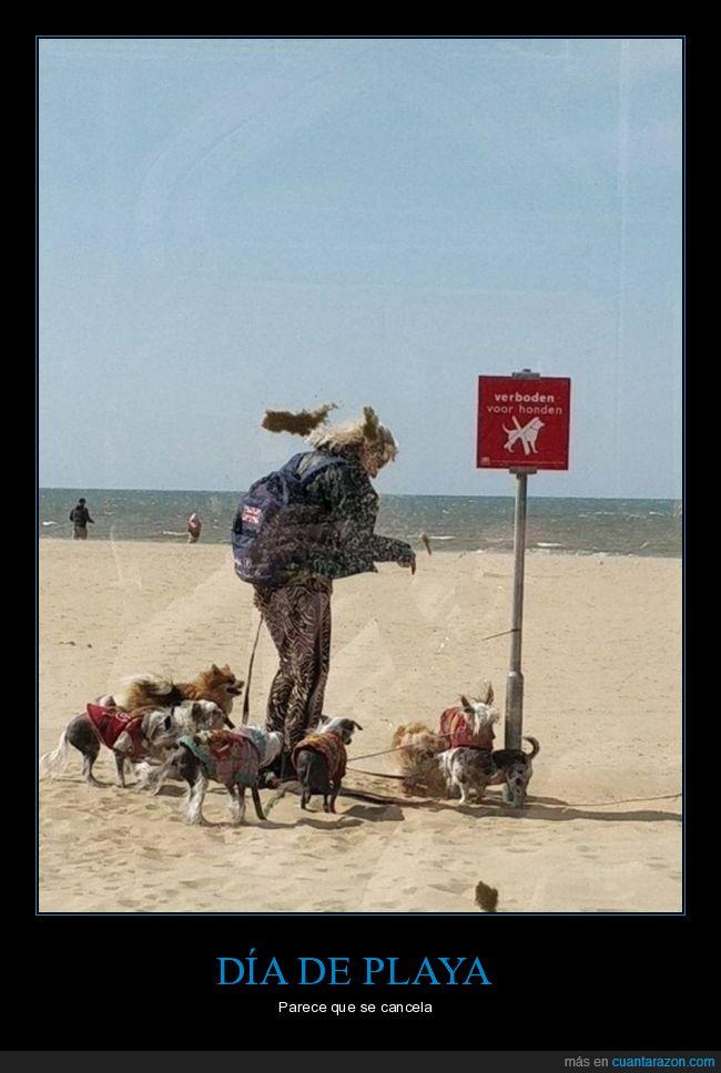 cartel,perros,playa,prohibición