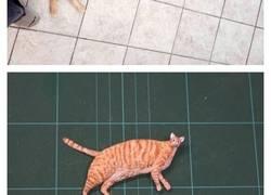 Enlace a Artista transforma fotos graciosas de internet en esculturas en miniatura