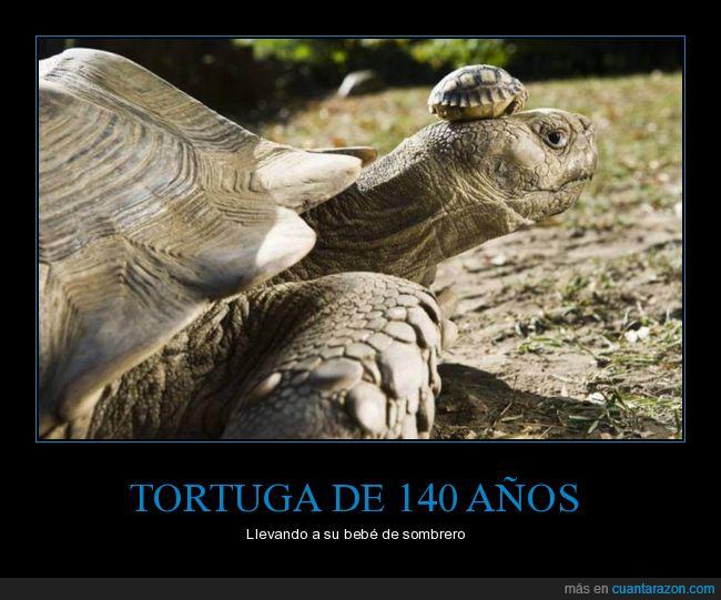 140 años,hijo,sombrero,tortuga