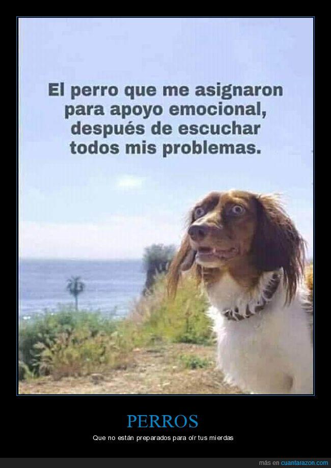 apoyo emocional,cara,escuchar,perro,problemas