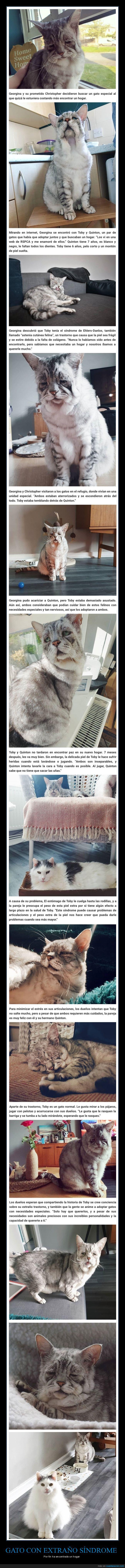 adoptado,gato,síndrome de ehlers-danlos
