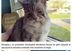 Enlace a Este gato con el síndrome de Ehlers-Danlos al fin ha encontrado un hogar