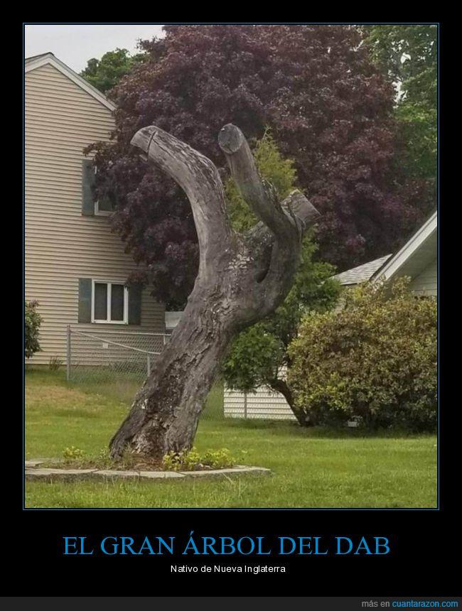 árbol,dab,wtf