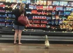 Enlace a De compras con la mascota