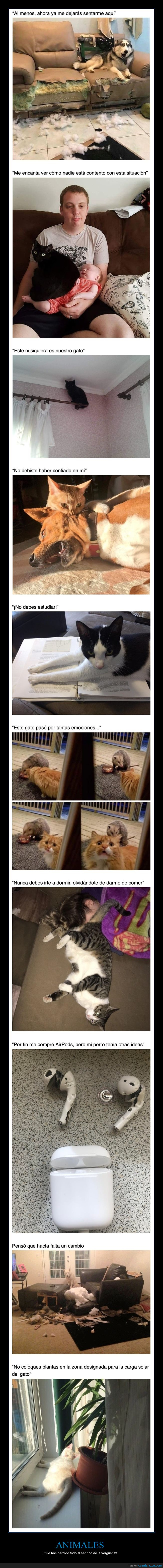 animales,sin vergüenza,wtf