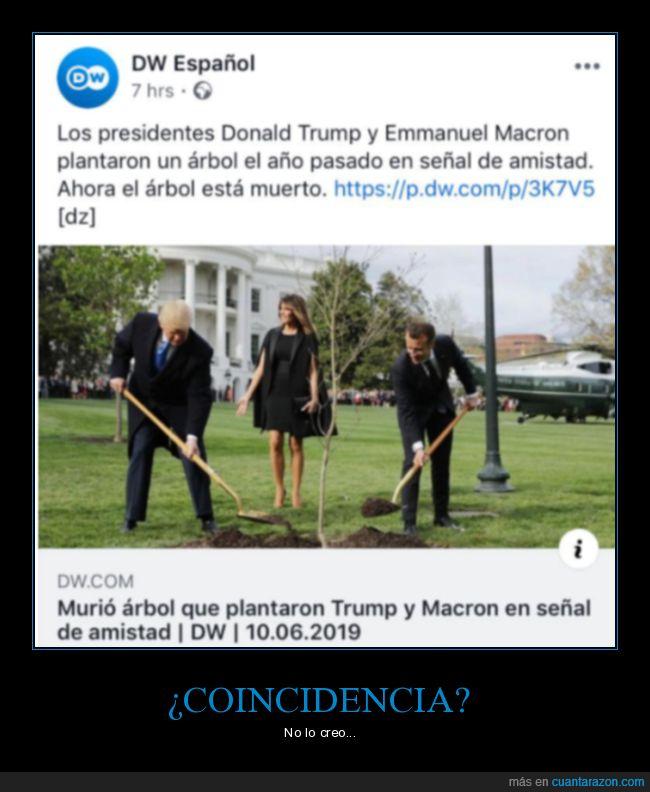 árbol,donald trump,macron,muerto,plantar,políticos