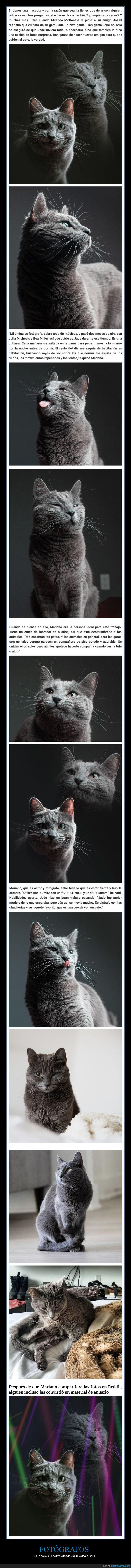 fotógrafo,gatos,sesión de fotos