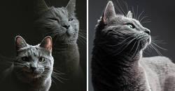 Enlace a Esto es lo que ocurre cuando un fotógrafo te cuida al gato
