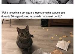 Enlace a Ejemplos de tiranía felina en los que se reconocerá cualquiera que tenga un gato en casa