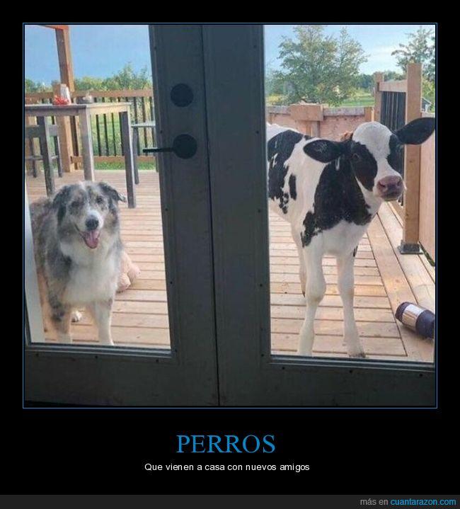 casa,perros,puerta,vaca,wtf