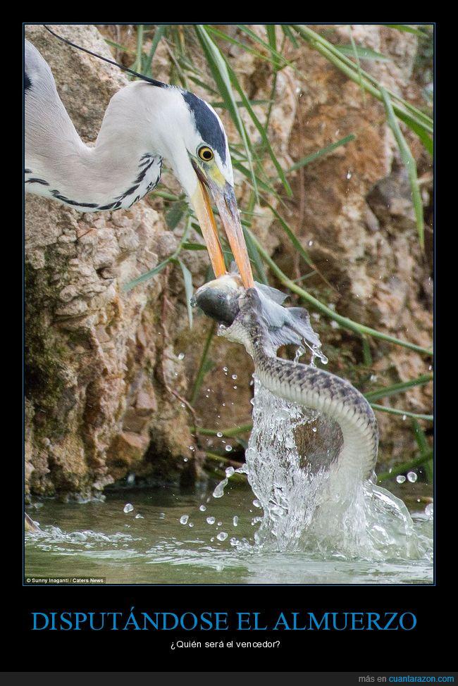 disputando,pájaro,pez,serpiente
