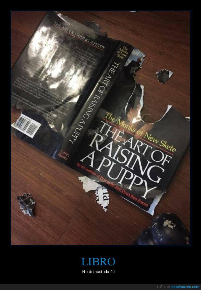 cachorro,criar,fail,libro,perro