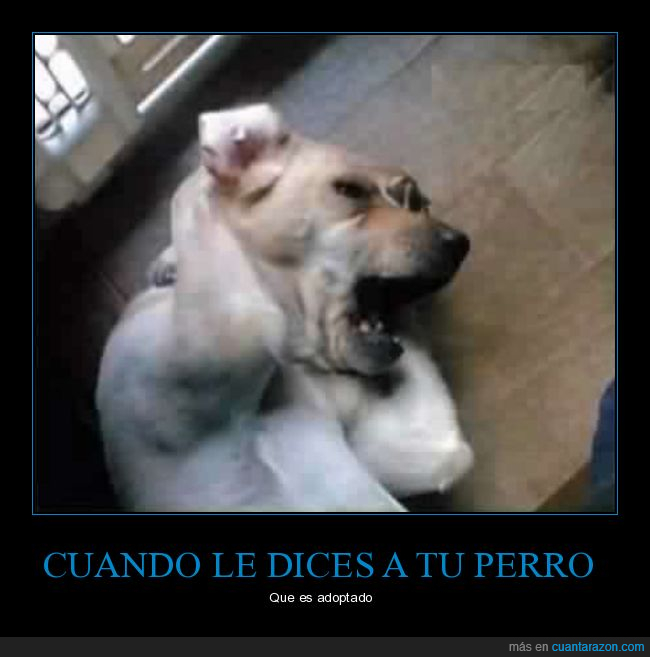 absurdo,adoptado,perro