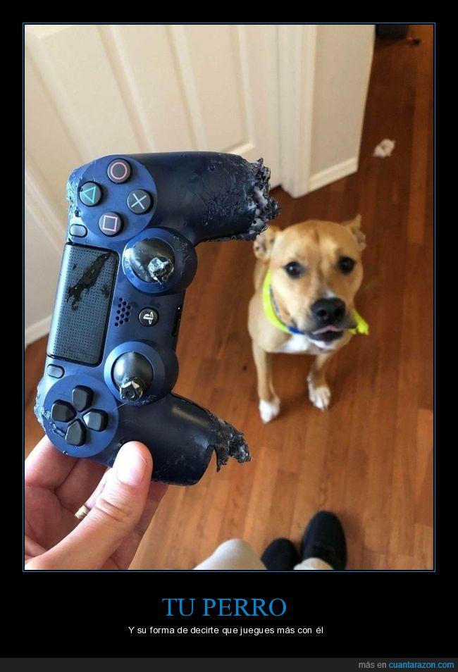 fails,mando,perros,videojuegos