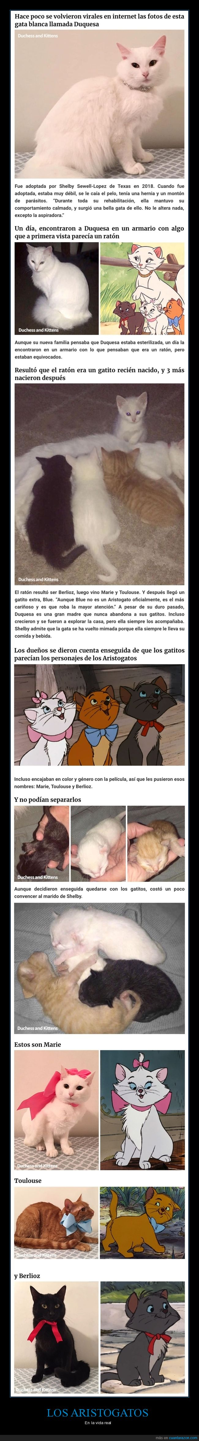 aristogatos,gatos,parecidos