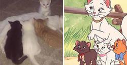 Enlace a Estos dueños llamaron a su gata Duquesa, y luego ella dio a luz a todos los gatitos de Los Aristogatos