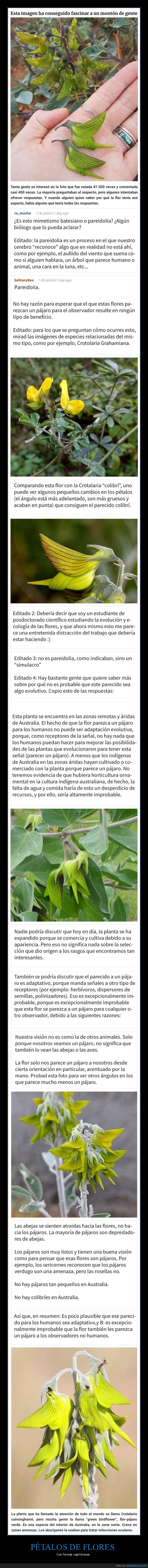 colibríes,flor,forma,pétalos