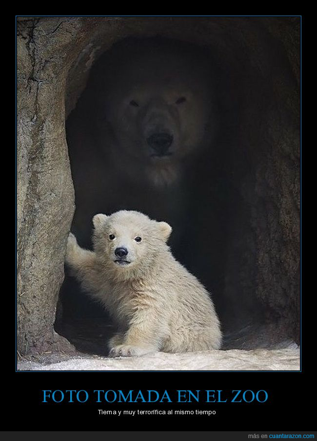 hijo,madre,osos polares,zoo