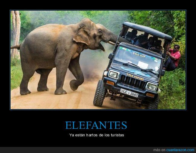 atacando,coche,elefante,turistas