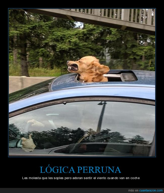 coche,perros,viento