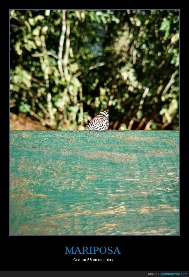 88,mariposa,wtf