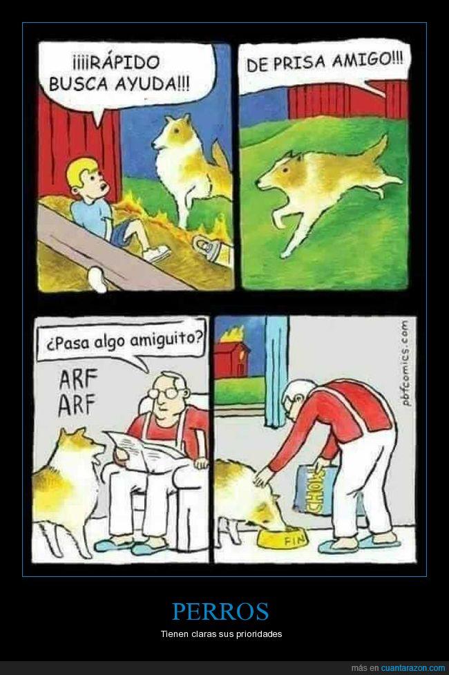 ayuda,comida,perro