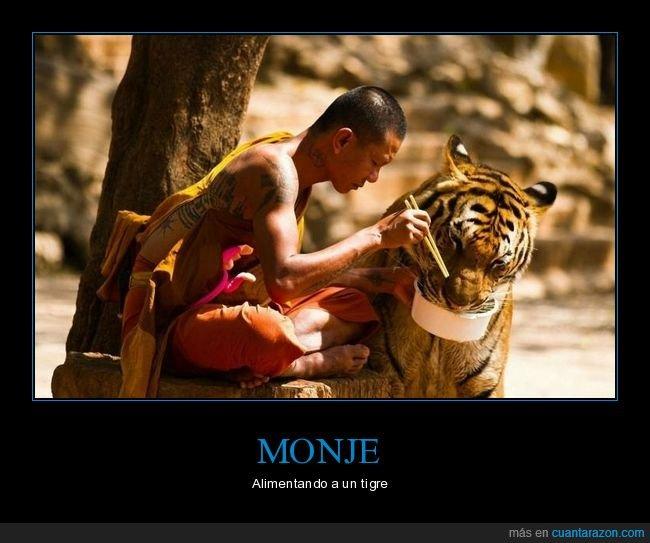 alimentando,monje,tigre