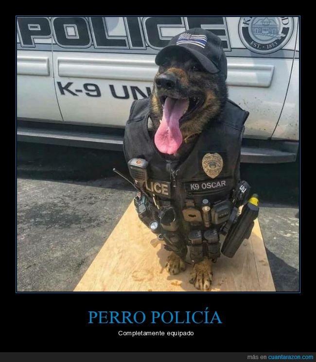 perro,policía,wtf