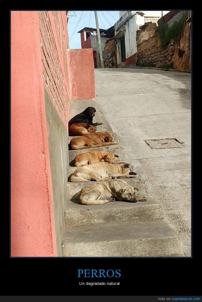 degradado,perros,wtf