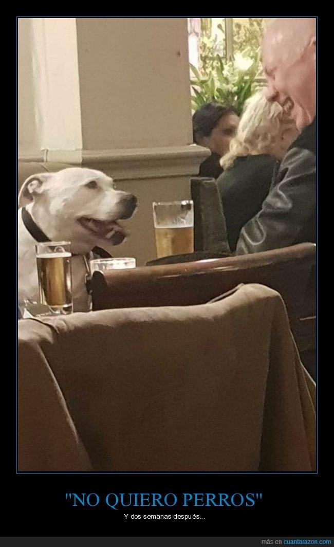 cañas,mejor amigo,padre,perro