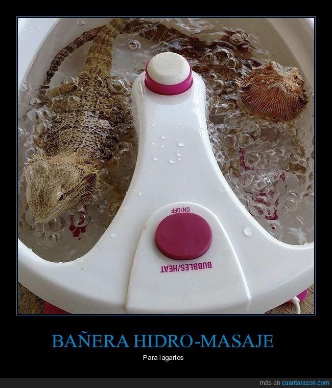 bañera hidromasaje,lagartos