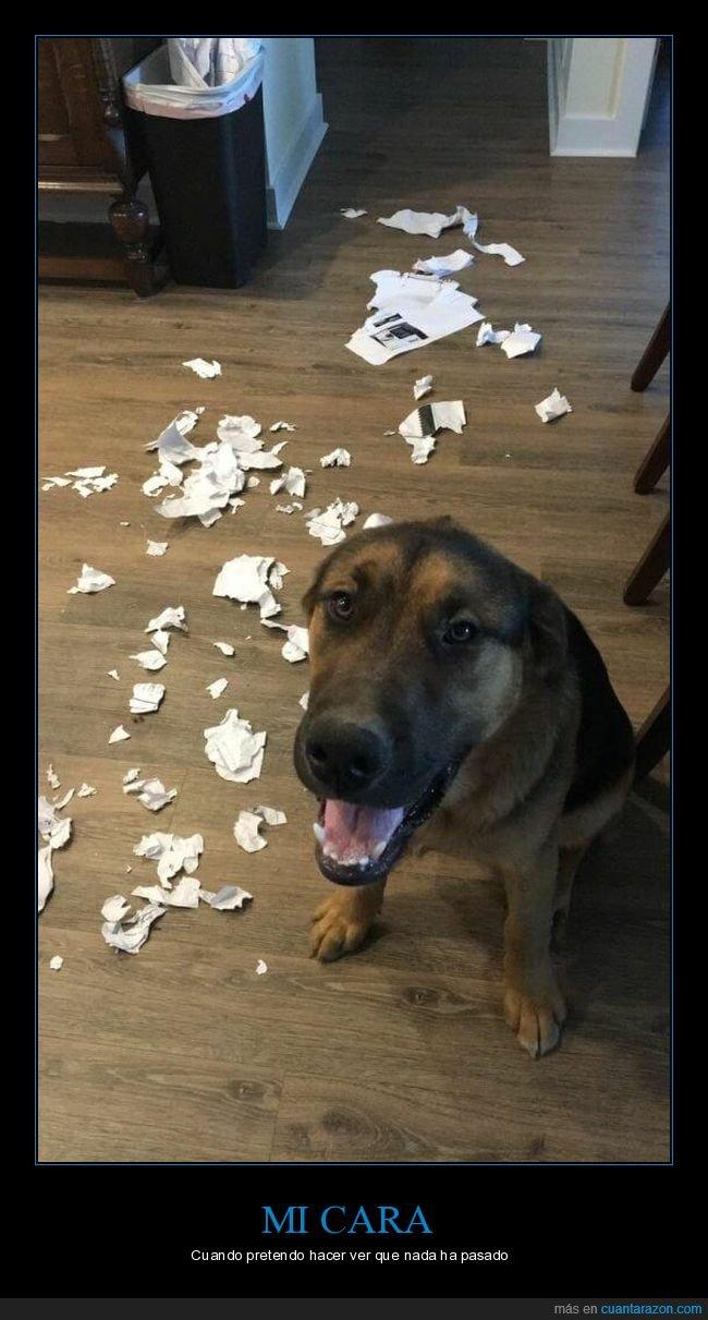 disimular,papeles,perro,roto