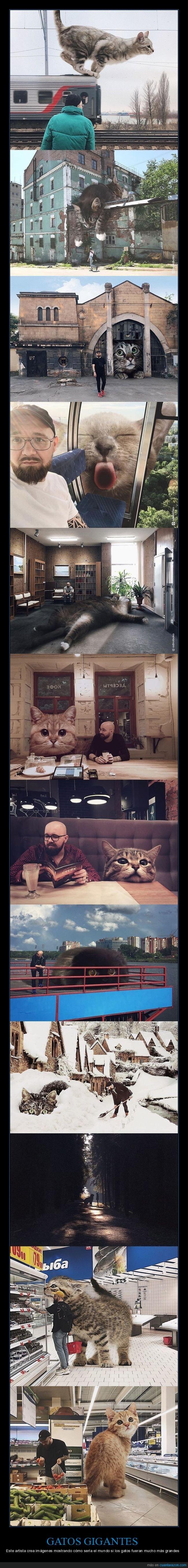 andrey scherbak,gatos,gigantes