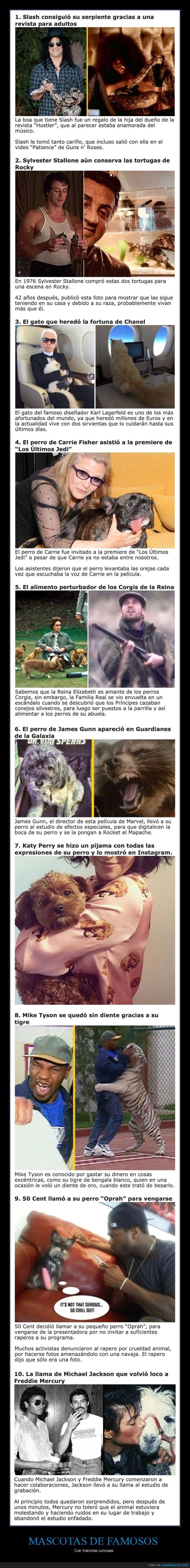animales,famosos,mascotas