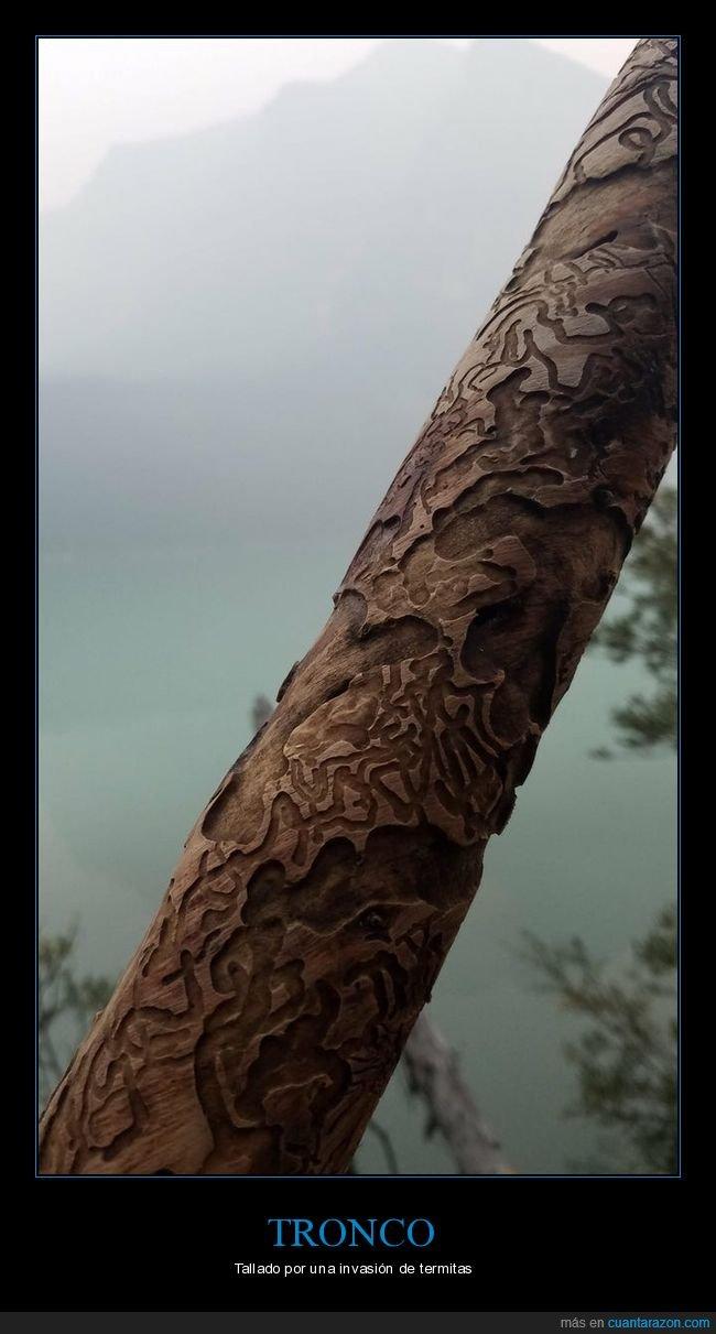 tallado,termitas,tronco