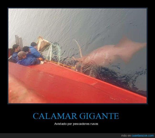calamar,gigante,wtf