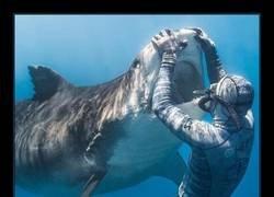 Enlace a Los tiburones también van al dentista