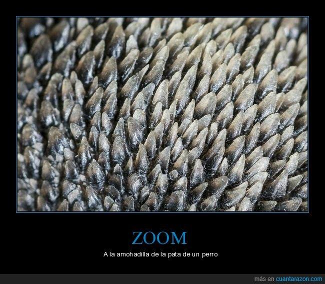 almohadilla,curiosidades,pata,perros,zoom