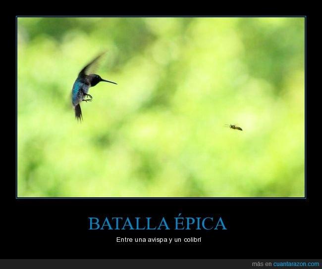 avispa,batalla,colibrí