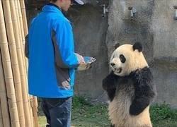 Enlace a El panda indignado